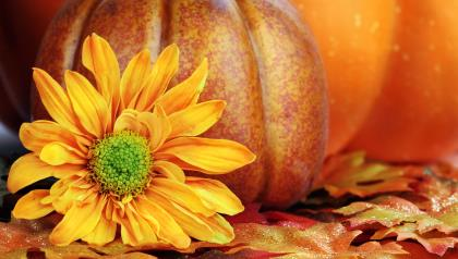 Beautiful-yellow-flower-and-a-big-pumpkin-for-Halloween_1920x1080.jpg