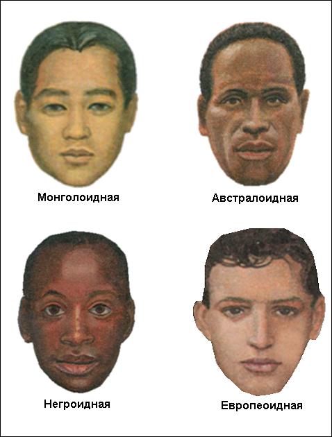 Картинки по запросу расы