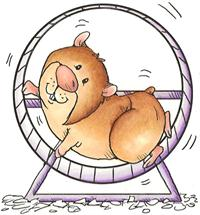 fb126c05b69cce0374e81543e4e4b951--cute-hamsters-hamster-wheel.jpg